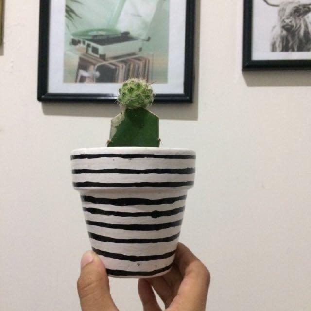 kaktus with clay pot