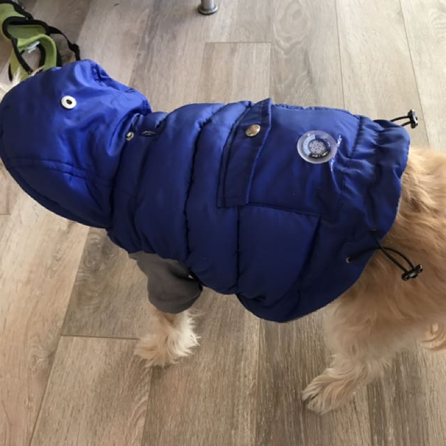 Xsmall blue dog jacket
