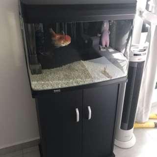 Fish tank 2ft