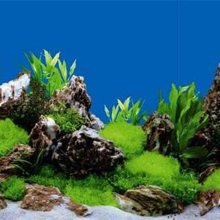 Fish tank backdrop and scenery