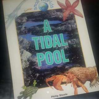 Science - A Tidal Pool