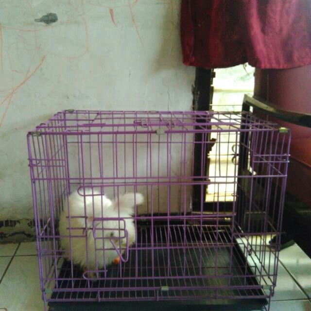 Kandang Kucing Kelinci Anjing 60x45