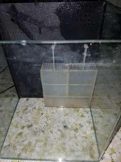 1ft glass ios cube tank