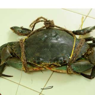 Live Female Crab with Roe