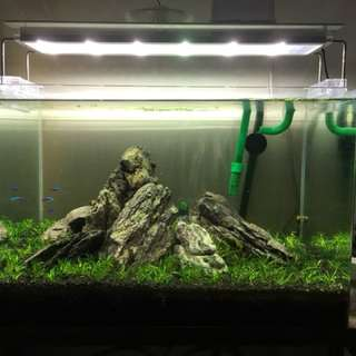 Aquascape set murah
