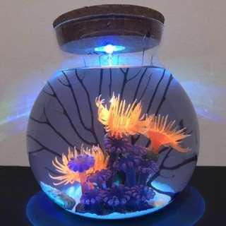 Snowy sea fan anemone shrimp jar ecosphere(Opae ula, hawaii shrimp, volcano shrimp, eco sphere shrimp, ecosphere shrimp, red shrimp, super shrimp, supershrimp,wonder land shrimp ) new year gift