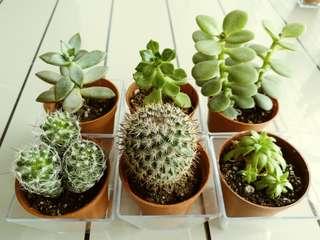 CNY sale! Cactus and succulent