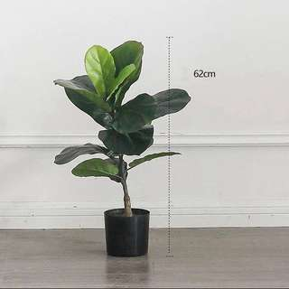 IN STOCK 62cm Artificial FIDDLE LEAF FIG Plant
