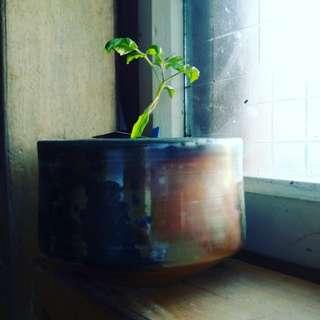 金色柴燒精品  茶碗