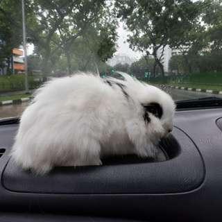 Pets Transport For Your Beloved Pets