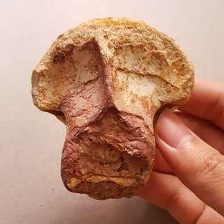 Spinosaurid Vertebra Fossil Dinosaur Bone
