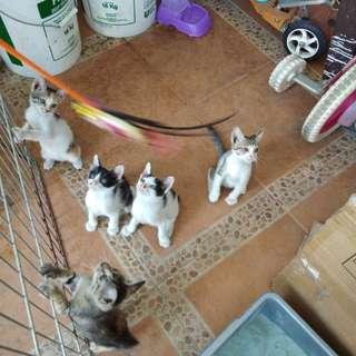 Dicari yg mau adopsi kucing.buat yg serius aja, cat lover, gratis