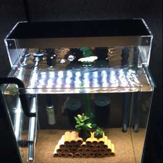 Full spectrum led light for water plant/bucephalandra/marine