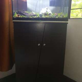 Planted Aquarium No Need CO2. Wholeseler Po Ako Brand New With Wooden Cabinet Stand