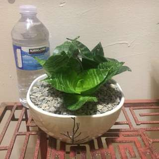 Green leaf plant in ceramic pot
