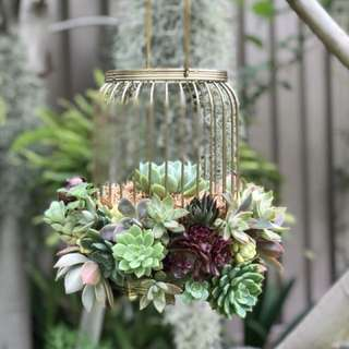 Birdcage Succulents Arrangement