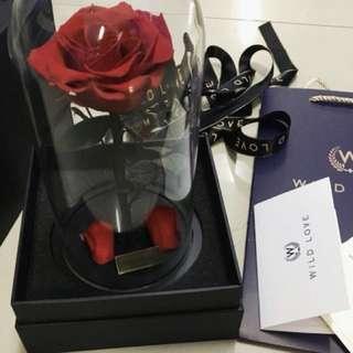 Wild love Preserved forver rose in Jar (Red)