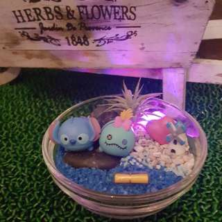 Valentine's Day Tsum Tsum Stitch & Scrump with LED light Air Plant