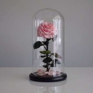 Premium Preserved Roses In Glass Dome