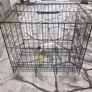 Rabbit cage with feeding bottle