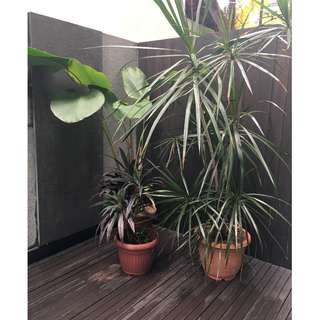 Plants - Red Coraline and Palms