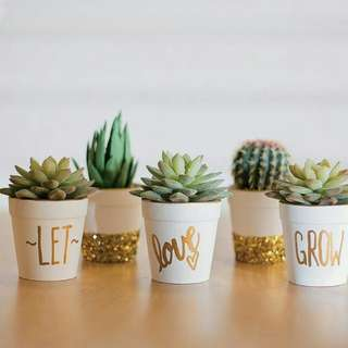 Succulent plant wedding giveaways