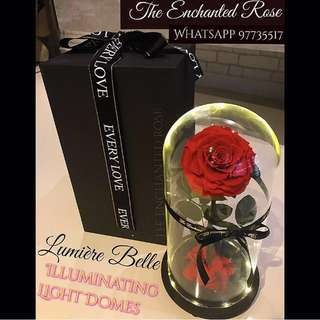 Enchanted Rose Light Domes🌹💕Real Ecuadorian rose which can last up to 5 yrs with minimal care😍Great gift for for your special one's Birthday / Graduation / special occasion / Proposal / Valentine's Day / Wedding