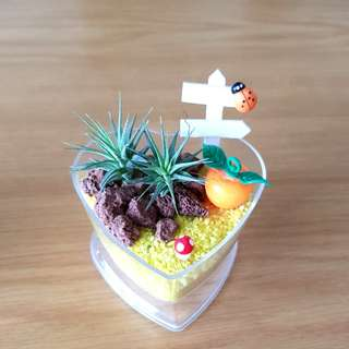 Air Plant with gift box for office & Gift !