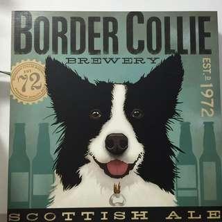 Border Collie portrait