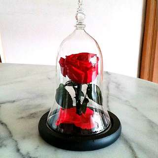 Preserved rose bell jar anniversary gift anniversary present birthday gift birthday present