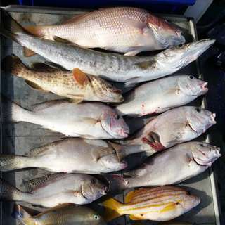 Local Offshore Southern Islands Fishing Trip - 28th January