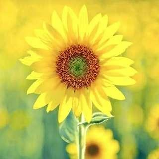 心情不是人生的全部,卻能左右人生的全部。 心情好,什麼都好, 心情不好,一切都亂了。 我們常常不是輸給了別人, 而是壞心心情貶低了我們的形象, 降低了我們的能力,擾亂了我們的思維,從而輸給了自己。 控制好心情,生活才會處處祥和。 好心態塑造好心情,好心情塑造最出色的你。 早晨☕