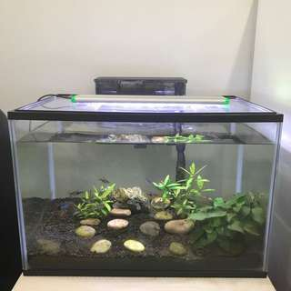 Fish Tank (fish included)