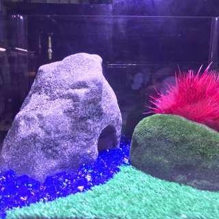 Fish tank set up.