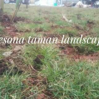 Rumput jepang dan pembuatan taman minimalis