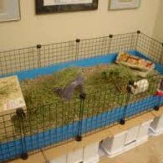 C&C cage grids guinea pig cage