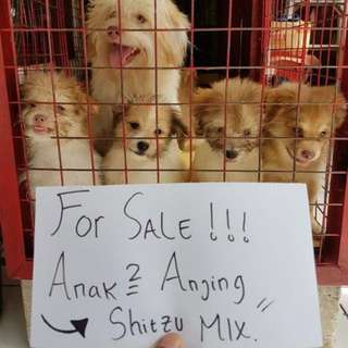 forr sale