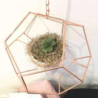 Rose gold hanging plant holder with free plant