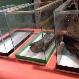 Aquarium + drift wood