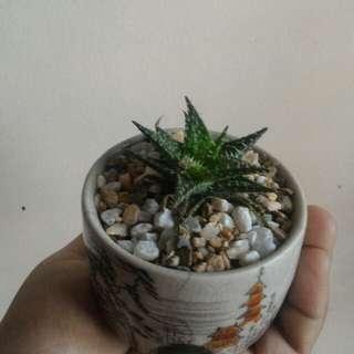 Succulent Setup