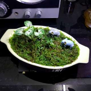 Moss and plants, Moss garden, indoor plants