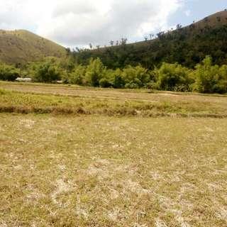 Coron Palawan 3.5 Hectares Agricultural Land (RUSH)