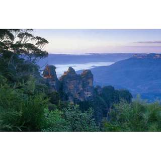 Eucalyptus Oil 100% pure 50ml from Sydney Blue Mountains Scenic World