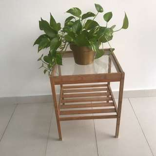 Plant Stand + potted plant