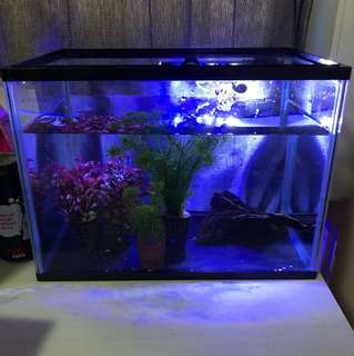 1ft fish tank and full set gears