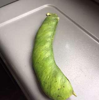 Sword bean seed