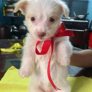 Puppy for sale!!!