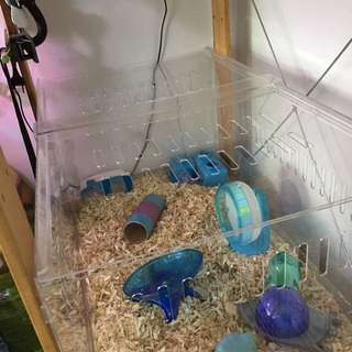 Hamster acrylic tank/cage