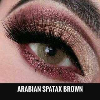 Arabian Spatax Brown