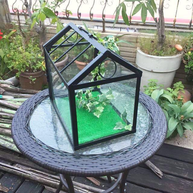 小溫室。小花房。佈置。空氣鳳梨。
